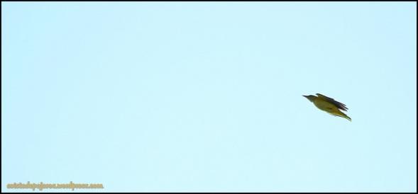 En vuelo (27-6-2014)