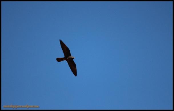 Fase negra en vuelo (28-6-2014)