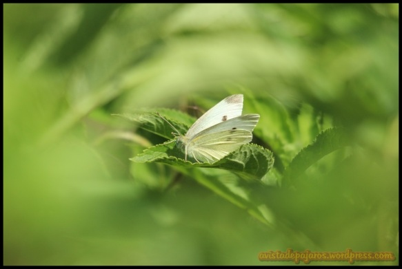 Mariposa (27-6-2014)