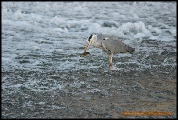 Con el pescado en la boca (9-6-2014)