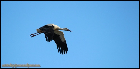 Pollo del año volando (27-6-2014)