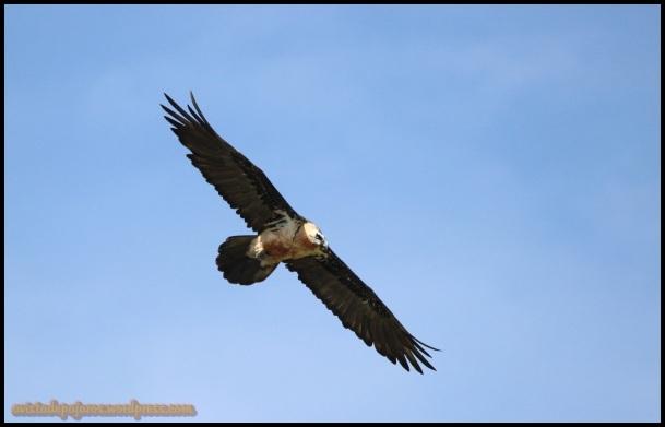 Adulto volando (18-7-2014)