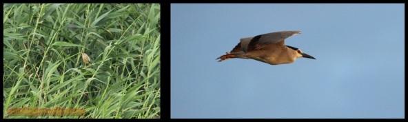 Aves al amanecer (2-7-2014)