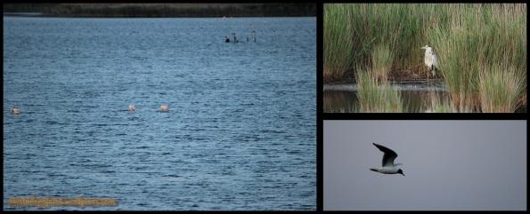 Variedad de aves (31-6-2014)