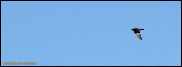 Avión zapador (18-7-2014)