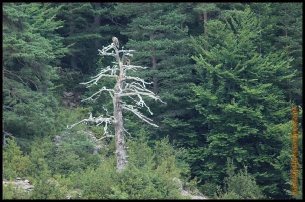 Posados en el árbol seco (20-7-2014)