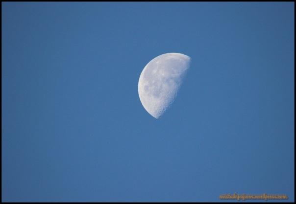 La luna me acompañaba siempre en mis primeras horas del día (18-7-2014)