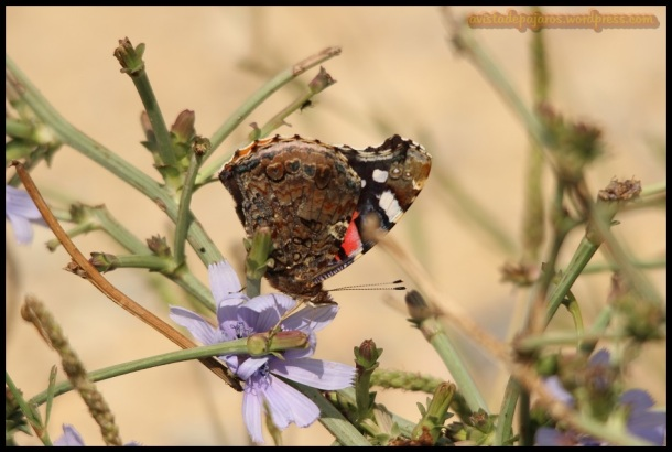Mariposa (1-7-2014)
