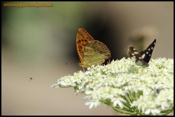 Mariposas (18-7-2014)