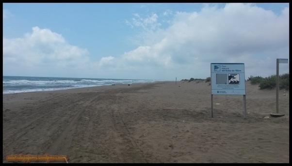 Playa (1-7-2014)