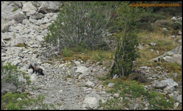 ¿cuantos osos véis en esta foto? (16-8-2014)