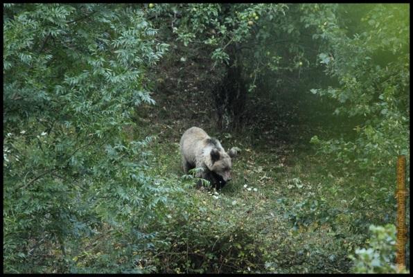"""""""Tarao"""" caminando por el bosque (25-8-2014)"""