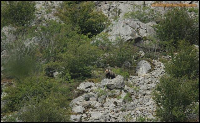Mama osa en lo alto de una roca (16-8-2014)