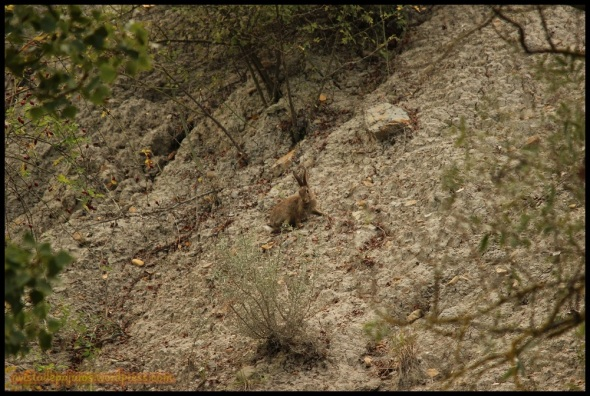 Conejo (20-9-2014)