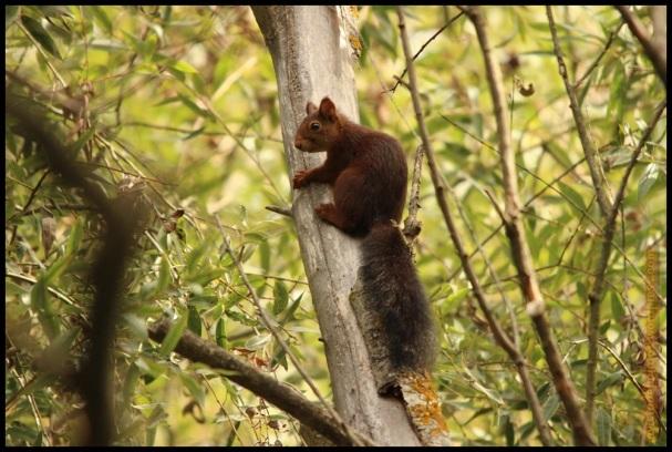 Ardilla agarrada a un tronco (20-9-2014)