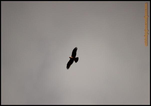 Calzada oscura en vuelo (20-9-2014)