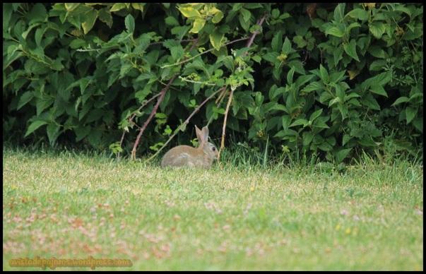 Conejo (7-9-2014)