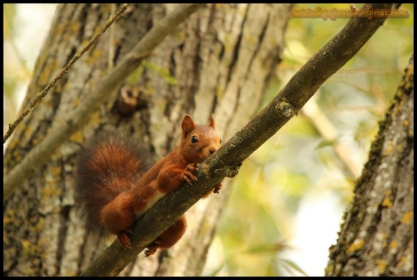 Una de las ardillas agarrada a una rama (20-9-2014)