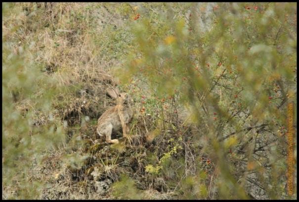 Conejo comiendo (24-9-2014)