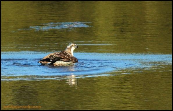 Pescadora en el agua (17-10-2014)