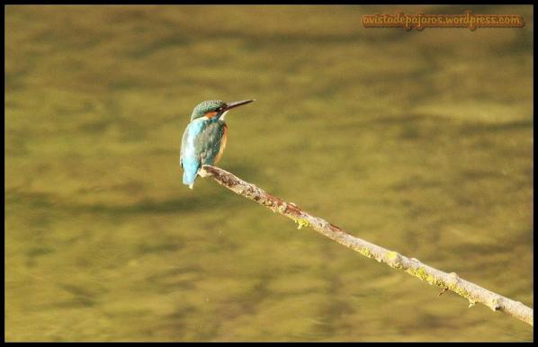 Posado en rama seca (24-9-2014)