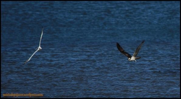 Pescadora agitando a una gaviota (17-10-2014)