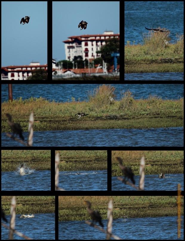 Escena de pesca (17-10-2014)
