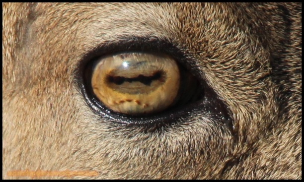 Detalle del ojo de un macho (31-10-2014)