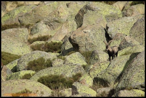 Entre rocas (1-11-2014)