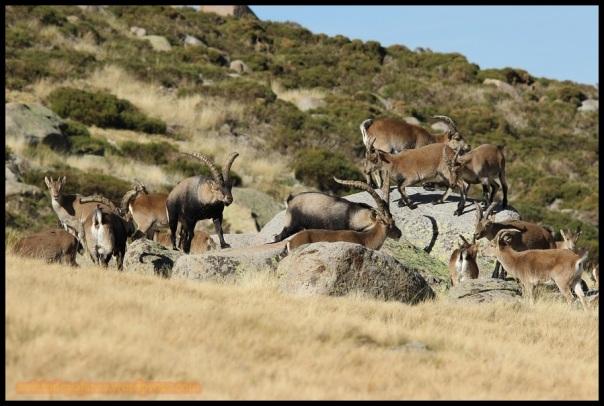 Grupo de machos (31-10-2014)