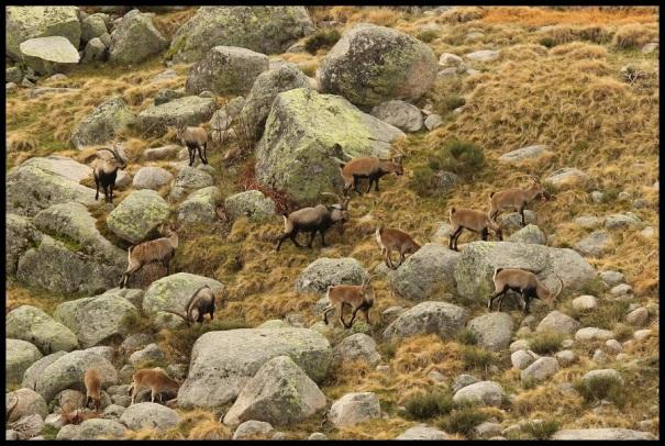 Grupo de machos (3-11-2014)