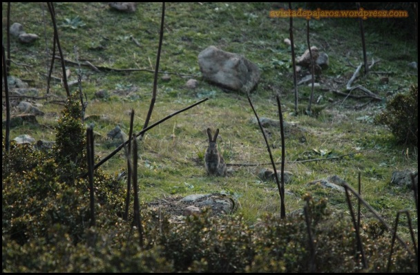 Conejo (9-12-2014)
