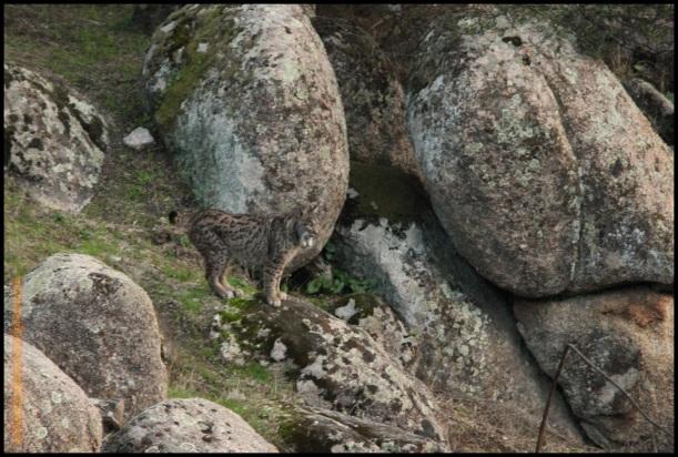 Oteando desde una roca (2-12-2014)