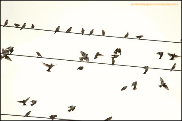 Chillones en el cable (4-1-2014)