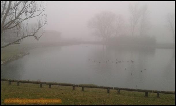 Niebla tras amanecer (10-1-2015)