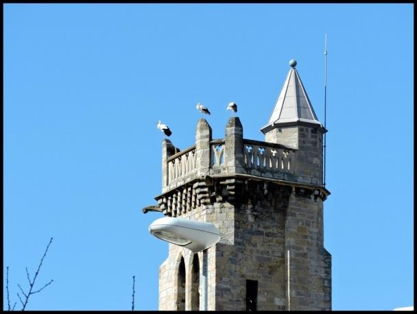 Cigüeñas descansando en la torre de la iglesia rotxapeana; Mikel Goñi (19-2-2015)