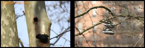 Diversidad en los árboles (20-2-2015)