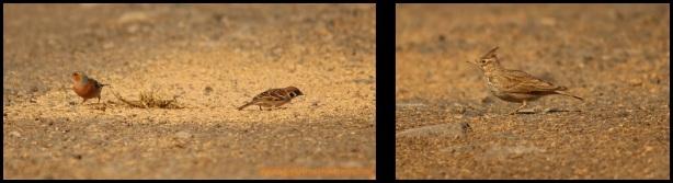 Variedad de aves aprovechándose del pienso (7-3-2015)