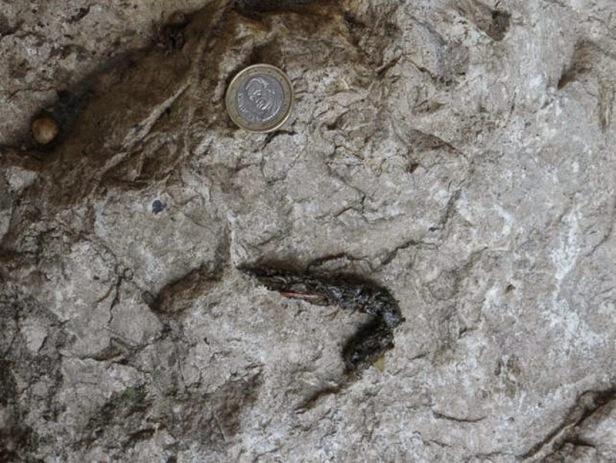 Excremento colocado sobre una piedra con fines de marcaje territorial