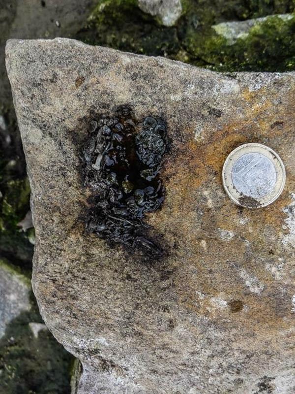 En este excremento, colocado en lugar prominente como marcaje territorial, se aprecian claramente las escamas de peces