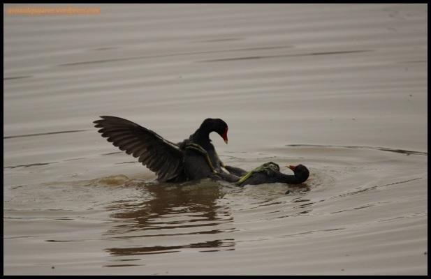 Peleando en el agua (20-3-2015)