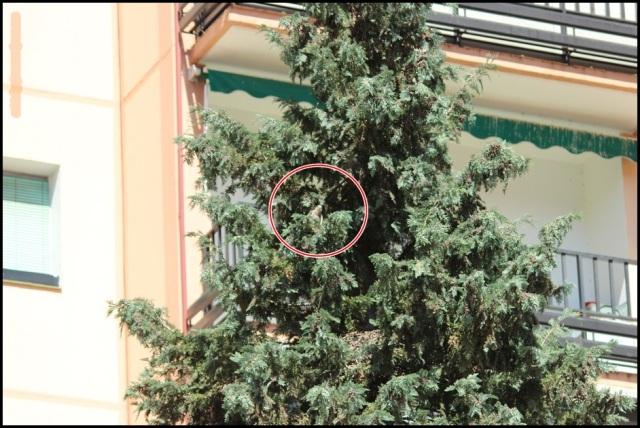 Localización del nido (20-6-2015)