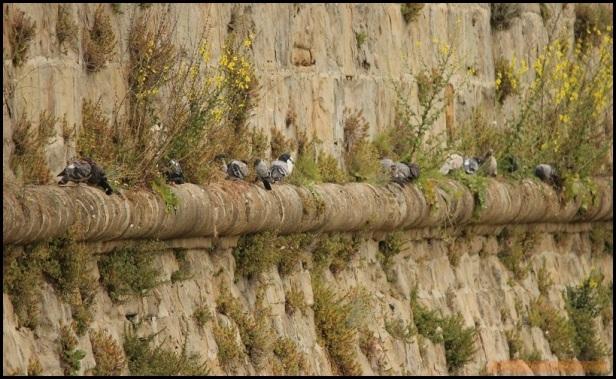 Palomas en la pared (17-6-2015)