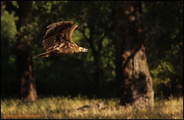 Aleteando en pleno vuelo (27-5-2015)