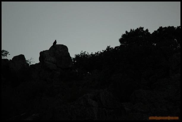 La reina del cielo posada en las rocas (26-5-2015)
