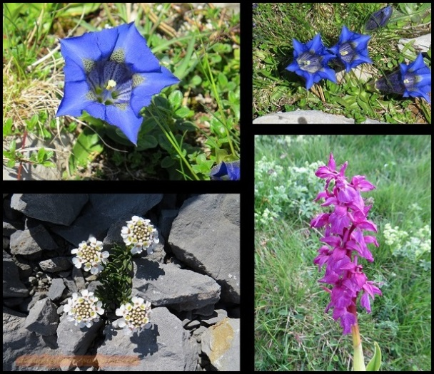 Variedad de flores (23-6-2015)
