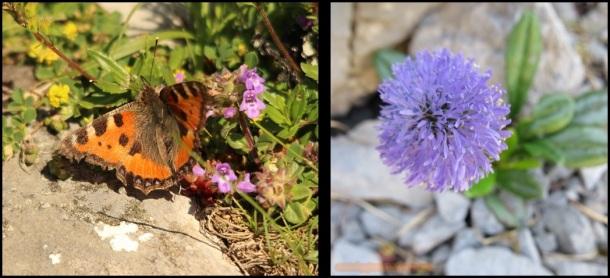 Mariposa y flor (22-6-2015)