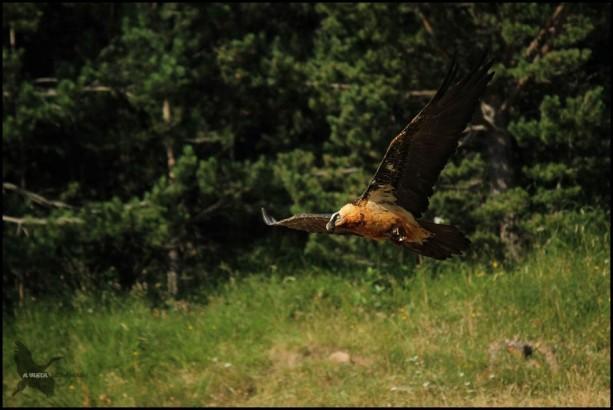 Volando raso (17-7-2015)