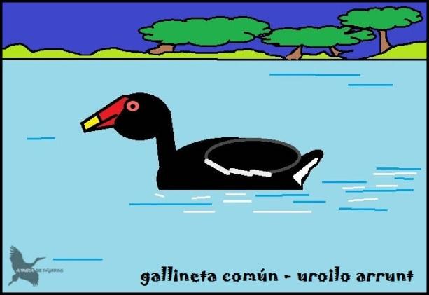 Gallineta común