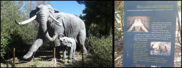 Elefante con su cartel (25-9-2015)